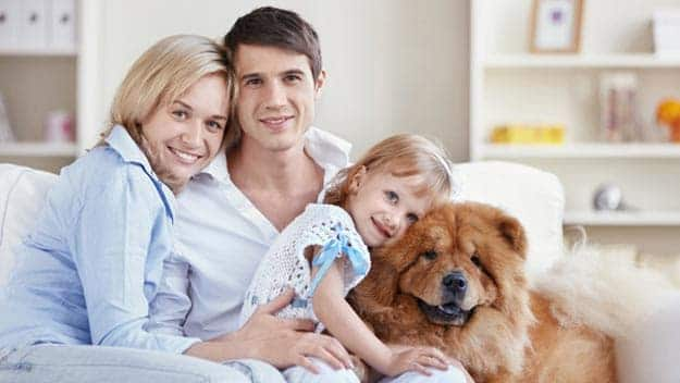Wills & Trusts dog-young-family Direct Wills Plashet